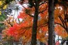 盛岡の紅葉