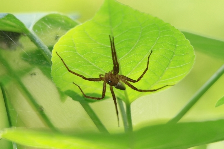 宍塚大池の昆虫たち
