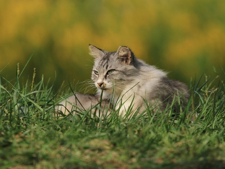 宍塚大池の猫たち